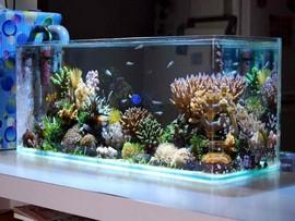 đặt bể cá trong nhà hợp phong thủy